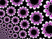 993905_fractal_flower_2